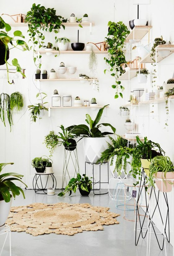 plants-4